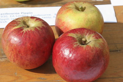 Eastbourne Pippin Apples